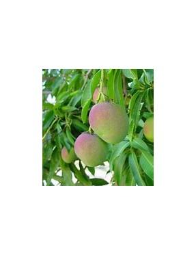 Confiture de Mangue et Pamplemousse